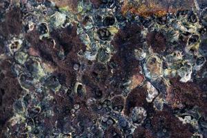 sten sniglar och limpets foto