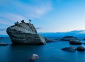 bonsai rock foto