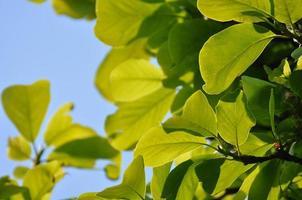 bredbladigt träd foto