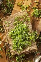 rå gröna rucola-mikrogreenar foto