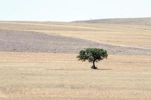ensamt träd foto