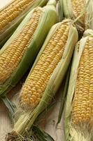 färsk majs på kolven foto