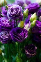 många lila ros