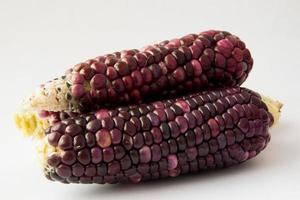 majs på kolven brunt foto