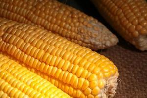 spannmål med färsk majs foto