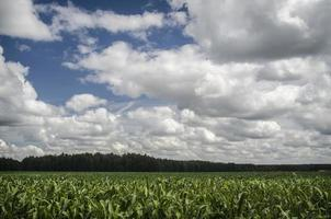 sädesfält foto