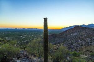 solnedgång med vackra gröna kaktusar i landskap foto