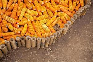 majs tillgängligt eller skickat till hans klienter. jordbruksprodukter foto