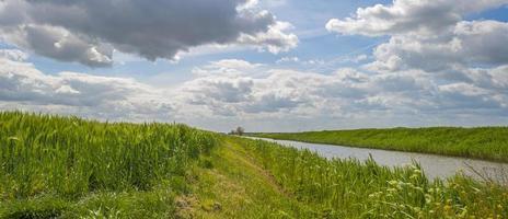 grönt vete som växer på ett soligt fält på våren foto