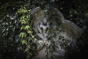 vinstockar på gravstenen foto