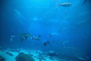undervattensunderland foto
