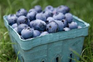 blåbär i en pintbehållare