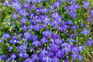 bakgrund av vackra blommor - fundo de belas flores