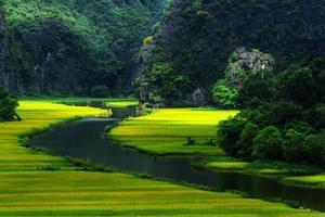 risfält och flod foto