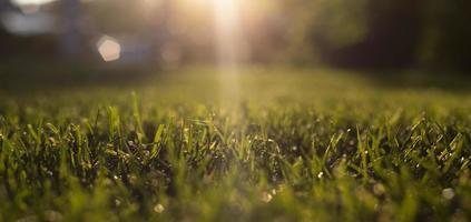vatten sommargräs foto