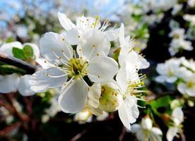 våren etudes foto