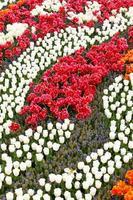 vårträdgård foto