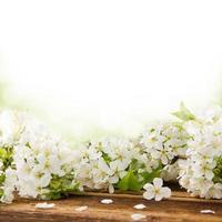 våren blommar