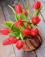 våren tulpaner foto