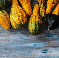 vilda kalebasser olika former för halloween foto