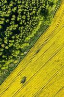 Flygfoto över gula skördefält foto