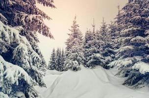 underbart vinterlandskap foto