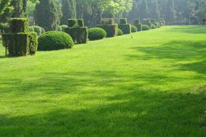 grönt trädgårdslandskap