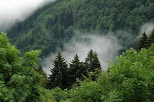 landskap i svart skog foto