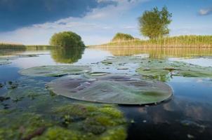 danube delta landskap foto