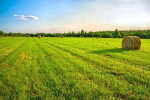 sommar lantligt landskap foto