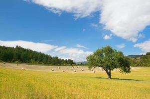 landsbygdens franska landskap foto