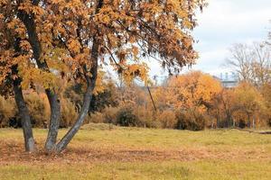 park landskap ensamt träd