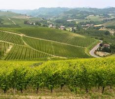 landskap i langhe (Piemonte)