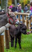 petting zoo foto