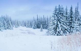 underbart vinterlandskap