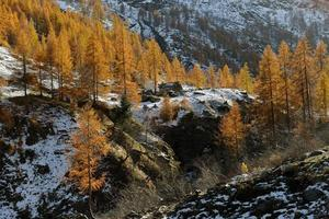 höstlandskap i Alperna foto