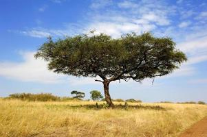landskap med träd i Afrika