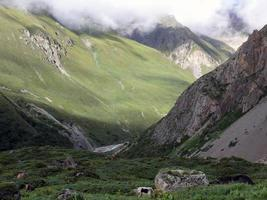 hög himalayan landskap med yaks foto