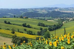 sommarlandskap i marscher (Italien)