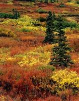 fall tundra foto