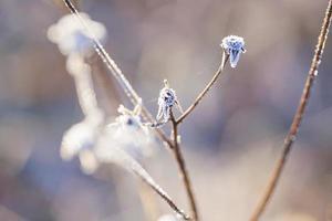 poetisk vinter foto