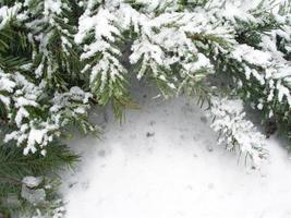 vinter bakgrund foto