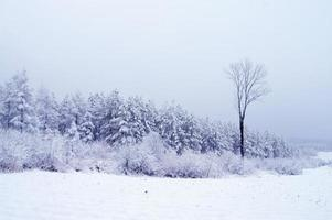 skog på vintern foto