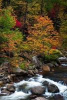 Wilson Creek hösten 10 foto