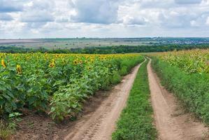 klassiska centrala ukrainska landskapet foto
