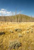 scerene landskap av tidigare bränd skog. foto