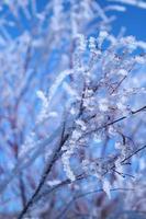 vinter- foto