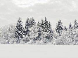 snölandskap vinter foto