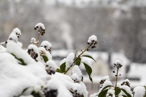 vintern luxembourg, europa foto