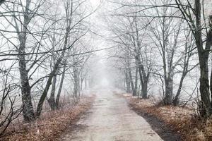vacker vinterväg